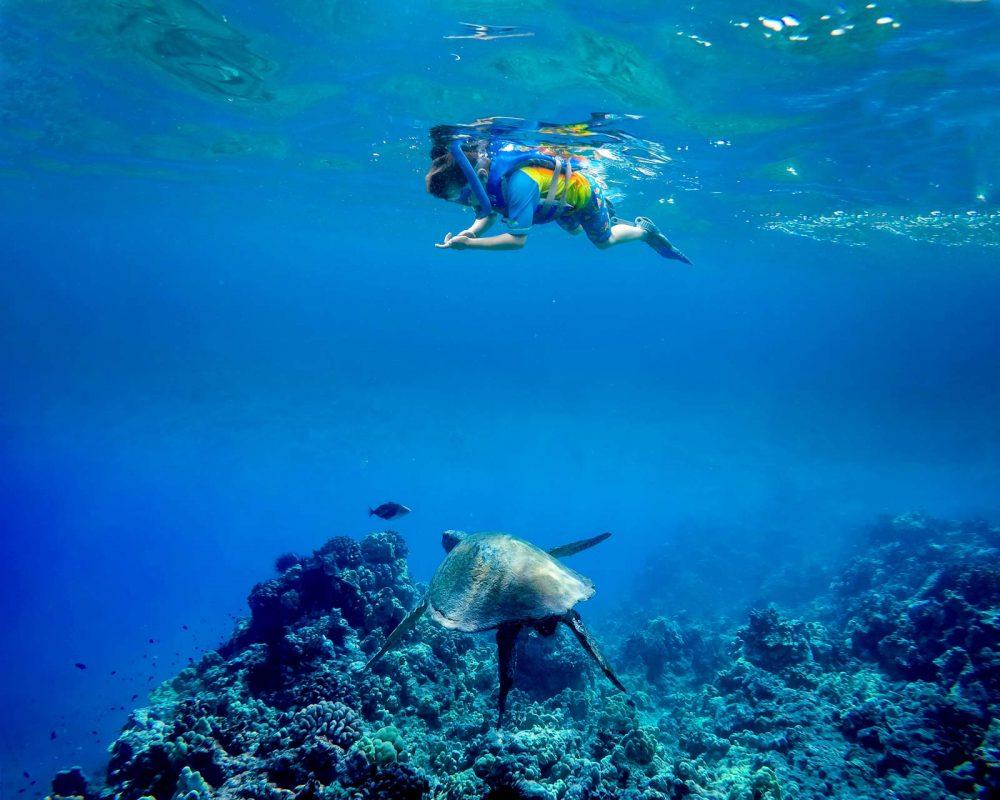Boy and Turtle in Maui, Hawaii